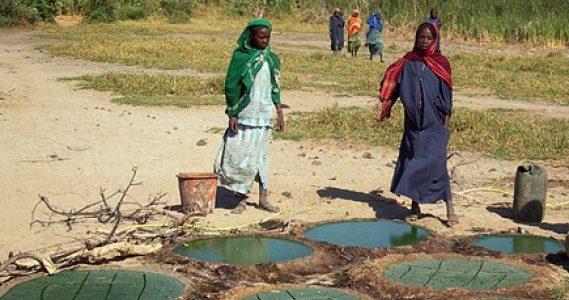 La spiruline cultivée chez les Kanembous